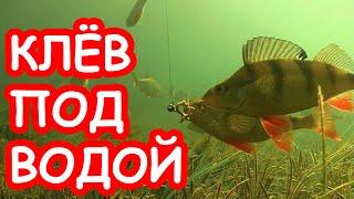 Блесна и мормышки для зимней рыбалки на окуня