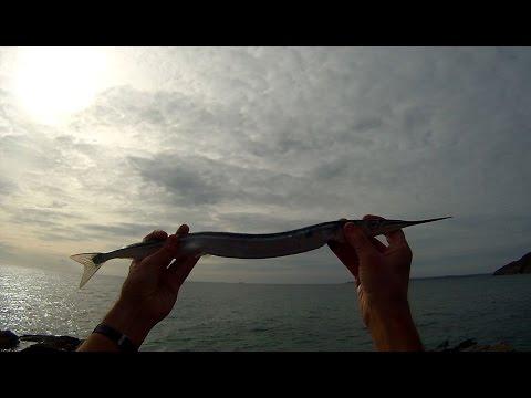 Flådfiskeri efter hornfisk på den engelske kyst