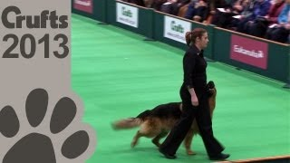 Obedience Dog Championships - Day 3 - Crufts 2013 (Jenny Gould & Zakanja Bitter N Twisted)