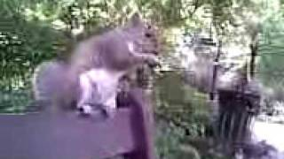 Squirrel sitting on bench eating nuts