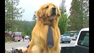Dog Runs For Mayor And Wins