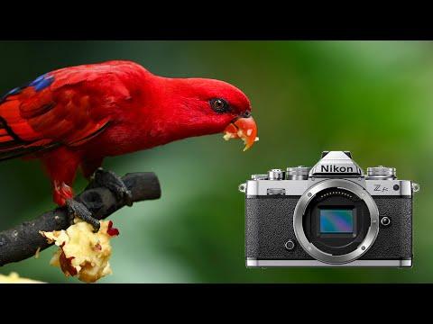 Should you buy the Nikon Z fc?