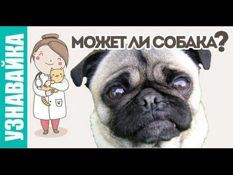 Может ли собака заразиться, плакать, отморозить? Узнавайка.