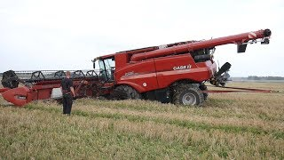 Case IH 9250 Axial-Flow Gets Totally Stuck in The Muddy Field During Harvest | Danish Agriculture