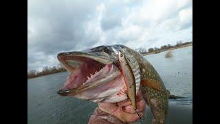 Рыболов актив липецк