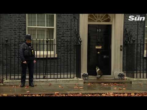 Policeman knocks on the door of 10 Downing Street to let a cat in