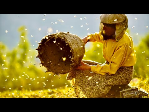 , title : 'ヨーロッパ最後の養蜂家と北マケドニアの大自然、驚くべき共生/映画『ハニーランド 永遠の谷』本編映像