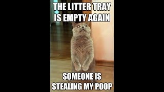 Funny Cat Photos With Captions Part 1