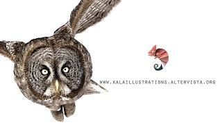 Feather - Kala Illustrations