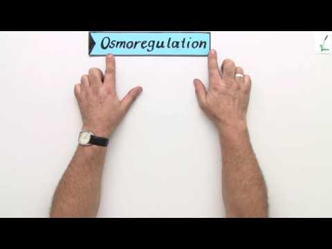 Hypertonie als Risikofaktor für Atherosklerose