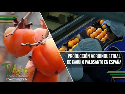 Fotograma del vídeo: Producción Agroindustrial de Caqui o Palosanto en España