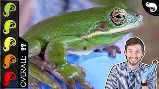 Green Tree Frog, The Best Pet Amphibian?