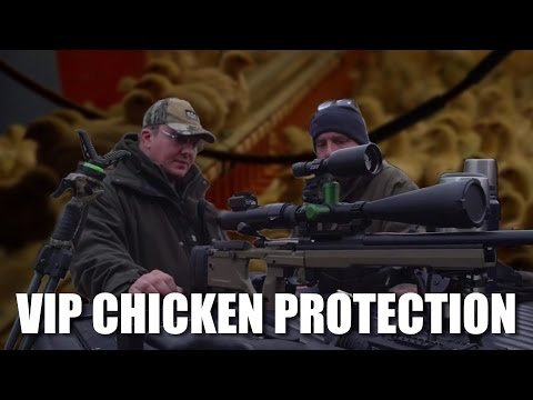 VIP chicken protection squad