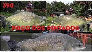 Os lindos Tambacus do Poço dos Pintados - Fishingtur na TV 390