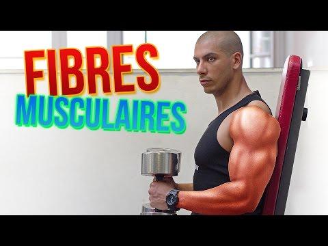 Le muscle de la personne de 7 lettres