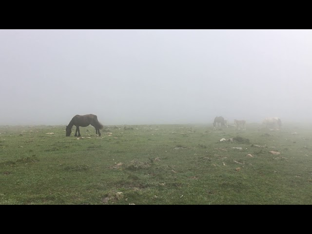 Wildpferde im Nebel an der spanischen Nordküste  I