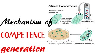 Mechanism of competence generation