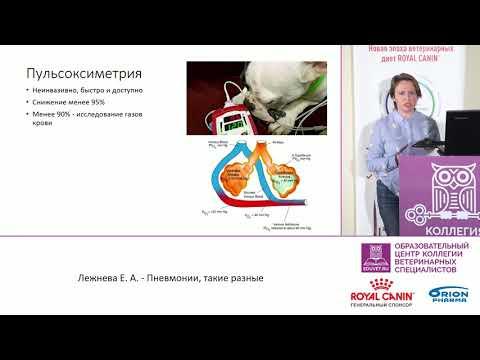 Лежнева Е. А. - Пневмонии, такие разные