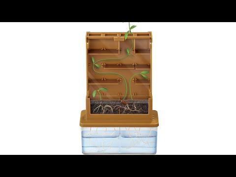 Set observación cómo crecen las plantas Green science