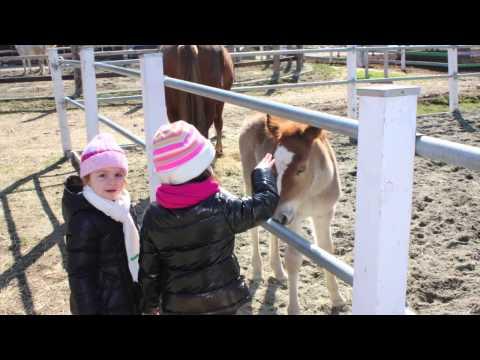 Sesso video Adrianne Palicki