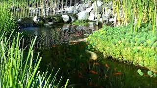 preview picture of video 'Botanischer Rundgang im Park des Resort Parco San Marco'