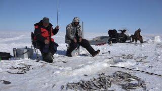 Зимняя рыбалка корюшки на удочку