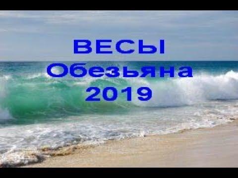 ВЕСЫ Обезьяна на 2019 год от J Dzay