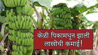 021 - Maharashtra Banana Gold Service - Shri. Pandurang Lavhale
