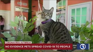 VIDEO: Fact or Fiction - Can you get the coronavirus from your pet?