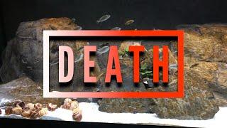 Brown Algae - Diatoms KILL IT NOW OR IT MAY KILL LATER