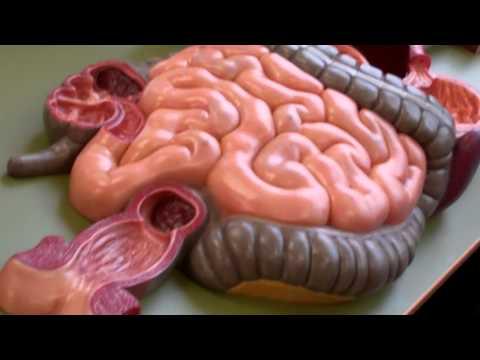 Trichocephalosis parazitológia
