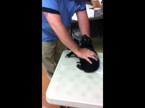 Puppy Screaming At The Vet
