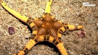 Nuestros Mares - Estrellas de Mar