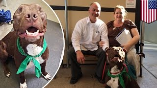 Dog with no eyes, Ashton, rescued by Arizona Humane Society and gets adopted after 2 days - TomoNews