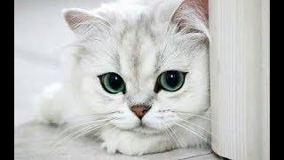 Кто на свете всех милее  ? Милые котики. Приколы. Подборка приколов best bob
