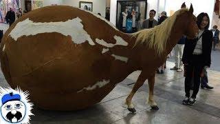 15 Craziest Horse Breeds Ever