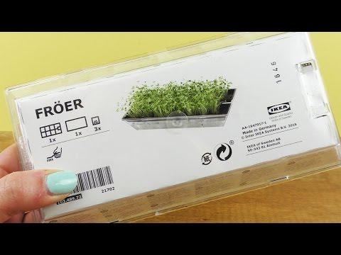 Evas pflanzt KRESSE | IKEA Kresse Set im Test | Pflanzen ziehen mit Kindern | DIY Idee