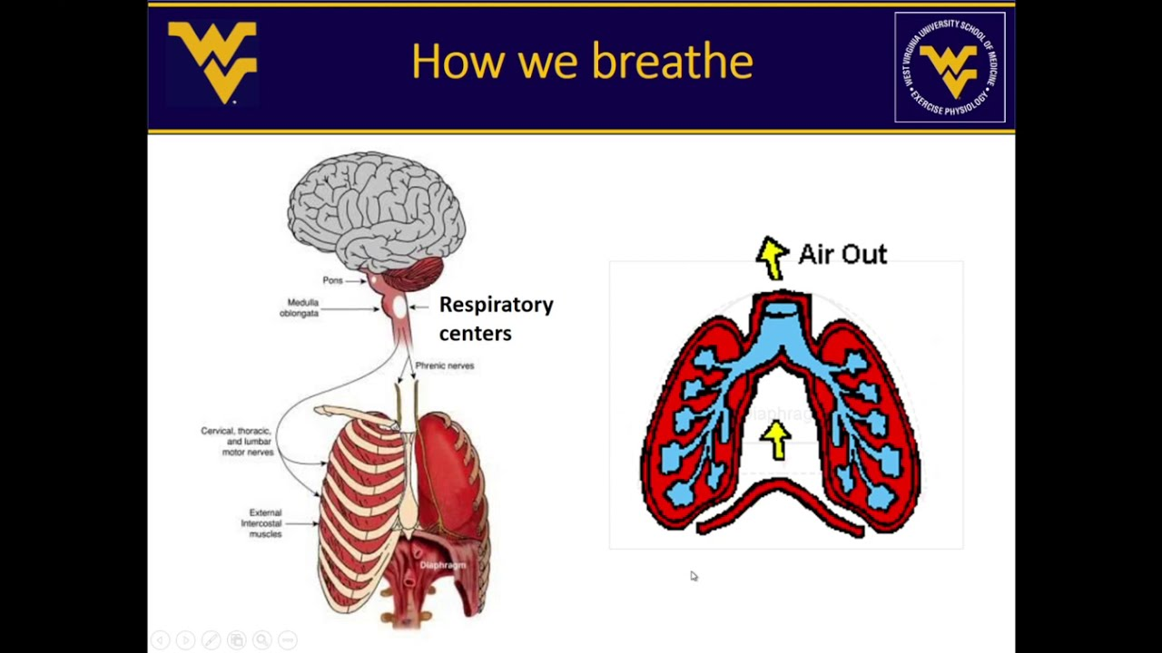 Play The How, Why and What of Respiratory Physiology