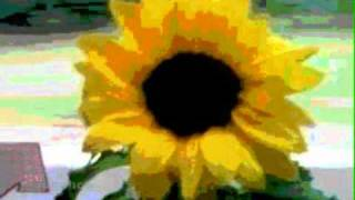 Everclear - Sunflowers