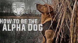 Alpha Dog   Training a Puppy