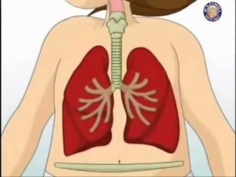 La presión arterial después del ejercicio