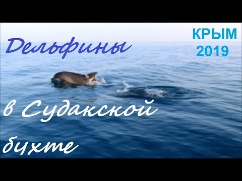 Дельфины в море. Крым, Судак 2019, 5 июня