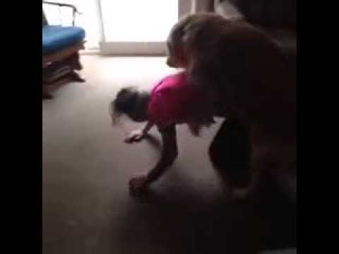 Horny Dog Tries To Hump A Hot Girl
