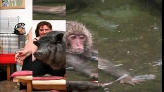 смешные названия животных, прикольные картинки с животными.