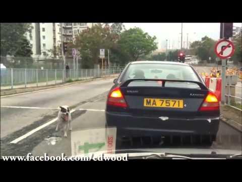 Chú chó bị bỏ rơi vẫn chạy theo xe chủ