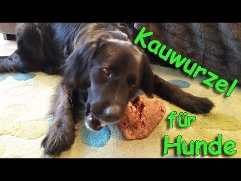 Die Kauwurzel für Hunde