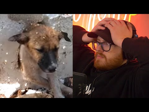 Fake Dog Rescue Videos Need to Stop |Paymoneywubby