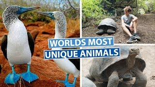 THE GALAPAGOS ISLANDS | Best Snorkelling in the World!