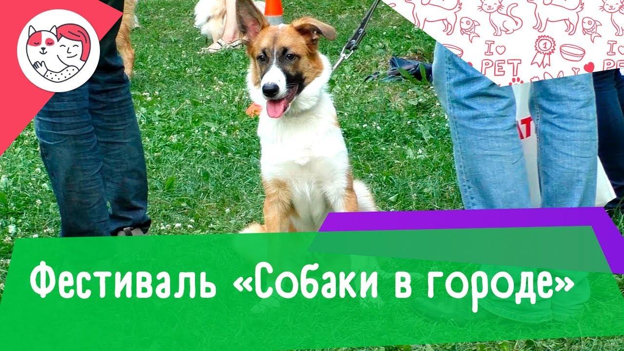 Фестиваль «Собаки в городе»