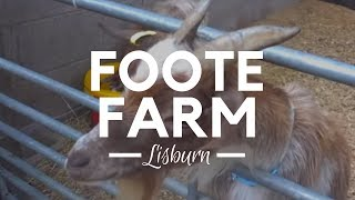 Foote Farm in Lisburn, Northern Ireland - Farms to Visit